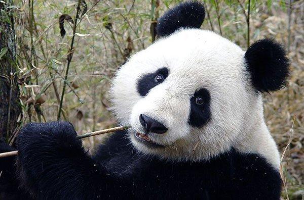 Онлайн камеры Зоопарк в Сан-Диего
