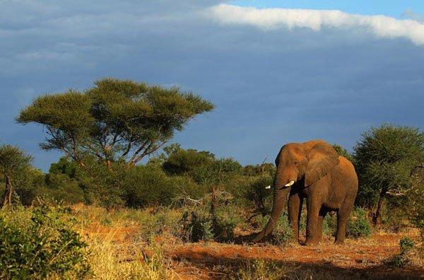 Камеры онлайн Южная Африка на границе с Национальным парком Крюгера