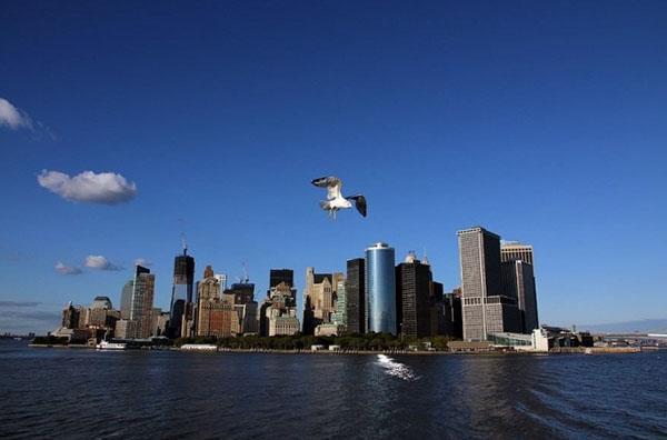 Камеры онлайн Нью Йорк (Манхеттен)