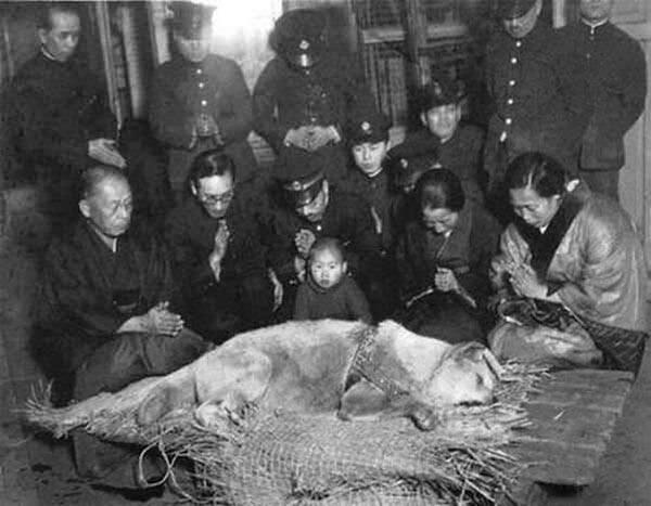 Хатико перед похоронами, 1935.