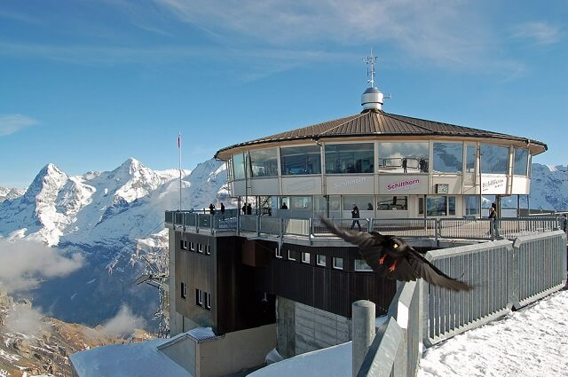 restoran-pic-gloriya-yungfrau-shvejcariya